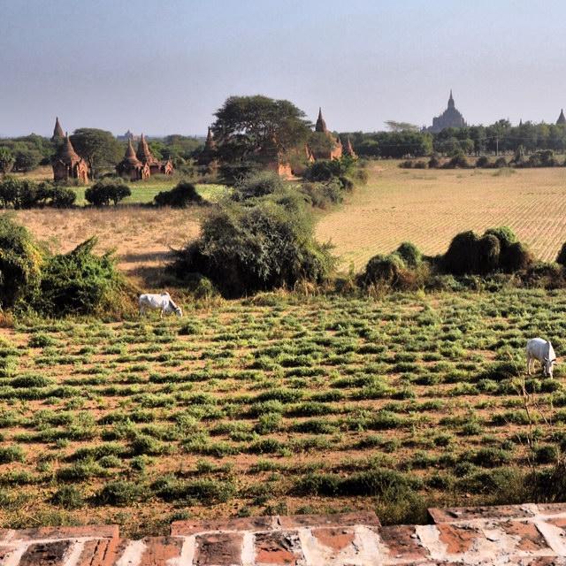 Farm_Fields_Around_Khay_Min_Gha_Temple