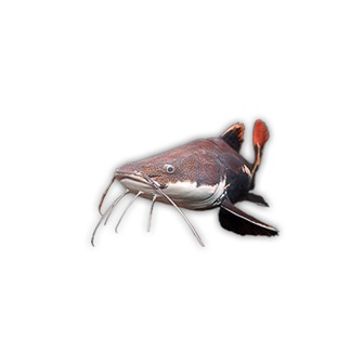 catfishing on Facebook